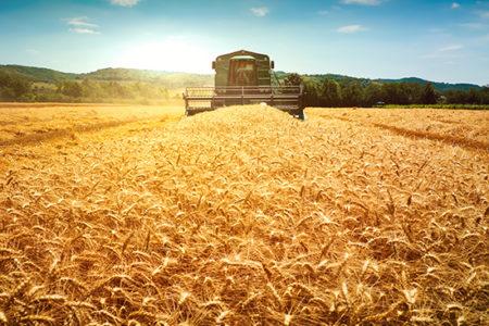 South Dakota Wheat Harvest