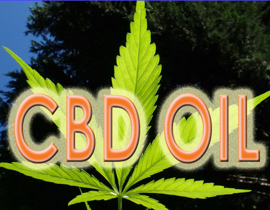 CBD oil, marijuana leaf