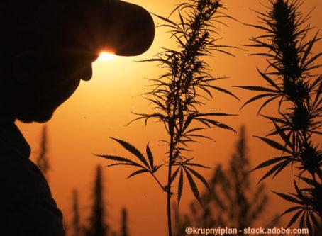 Silhouette of man, hemp leaves.