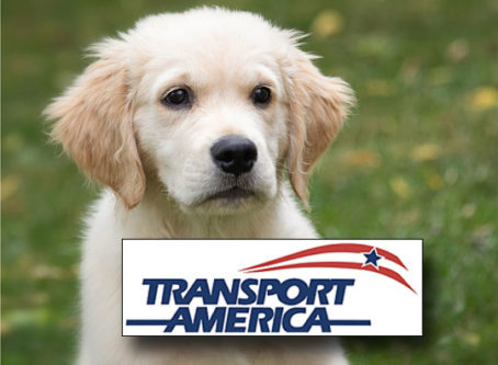 Service animal, Transport America logo