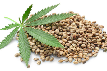 Idaho hemp