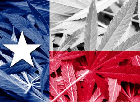 Texas hemp case, Texas fals, cannabis leaves