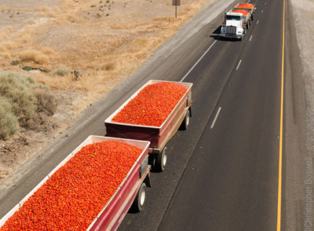 Agricultural haulers, loads of roma tomatoes