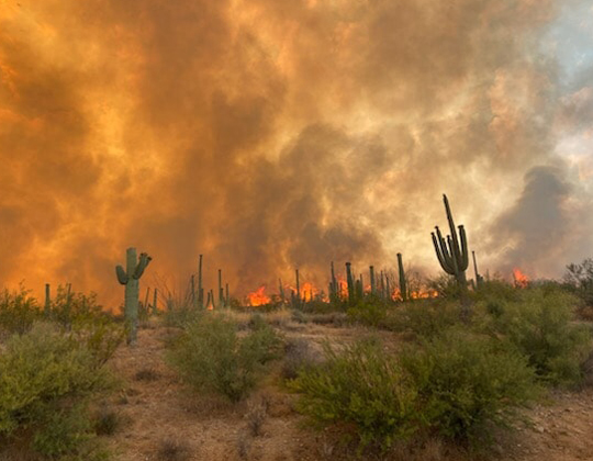 Bush Fire in Arizona shuts down sections of state highways