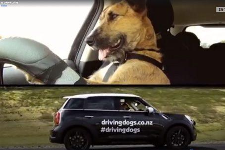 Doggie Driver Training